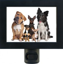Make a custom night light from your pet photo.
